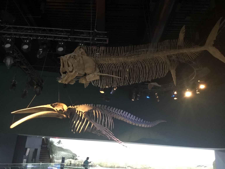 いきなり巨大魚とクジラの全身骨格