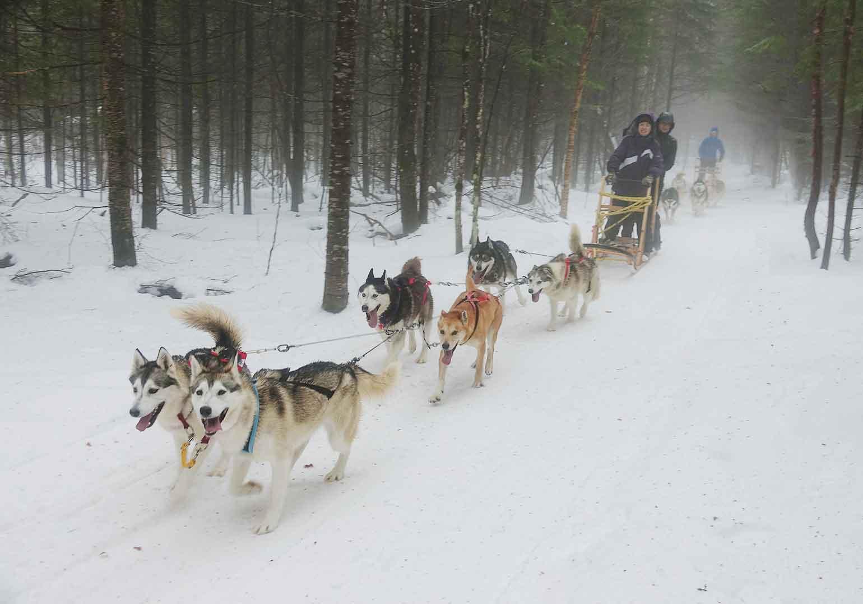 犬ゾリで森の中を駆けるのは、大迫力!