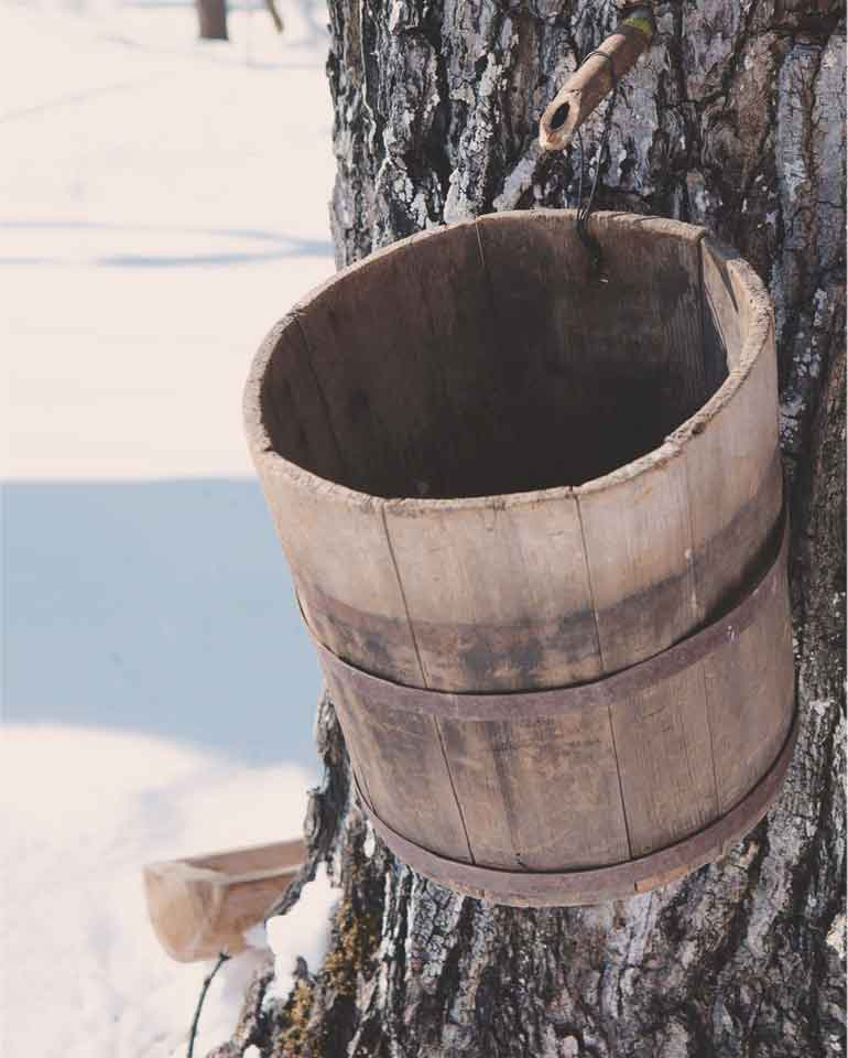 樹液採集バケツ