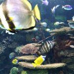 冬のお出かけのおすすめトロントの水族館