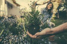 オンタリオ州、今日から園芸センターなど一部ビジネスが再開   カナダ新型コロナ