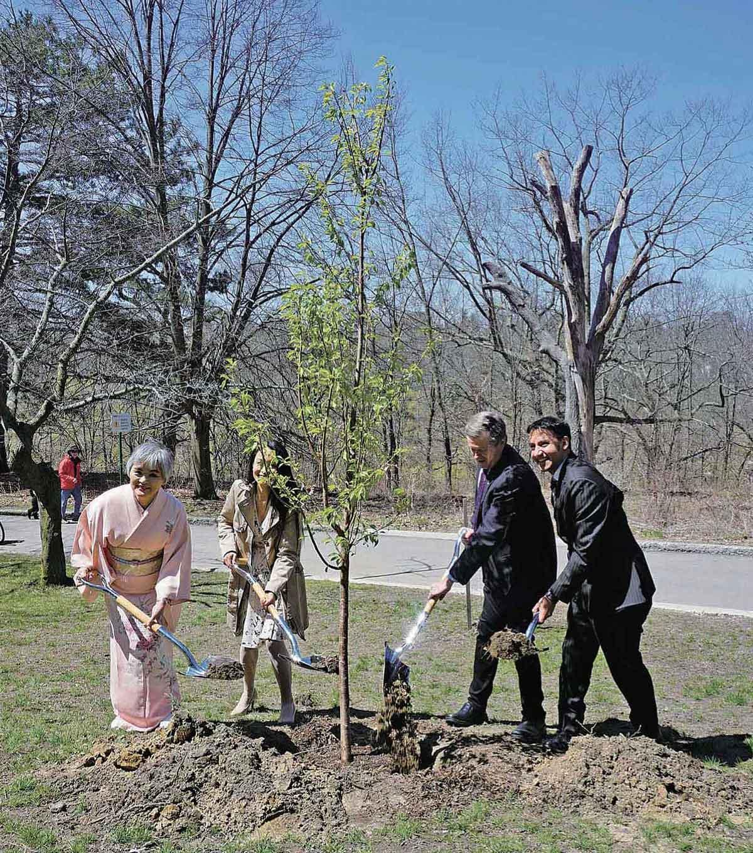 桜の名所、トロント・ハイパークの桜寄贈60周年記念