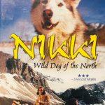 ハスキー犬と熊の友情/映画「NIKKI, Wild Dog of the North」